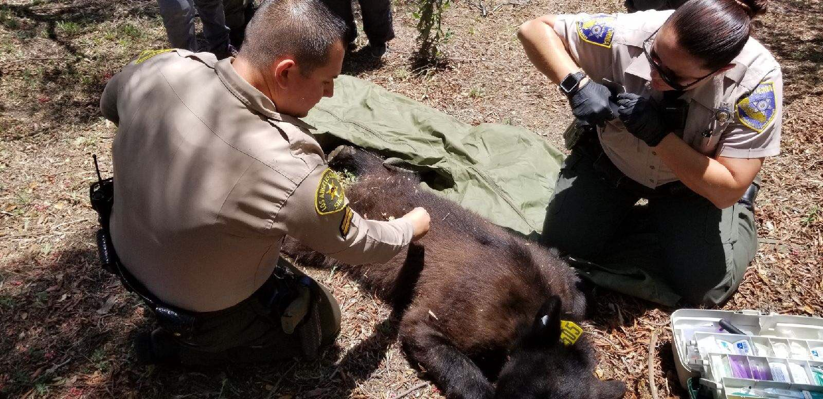 Scv News Pair Of Bears Visit Scv In Search Of Food Scvnews Com