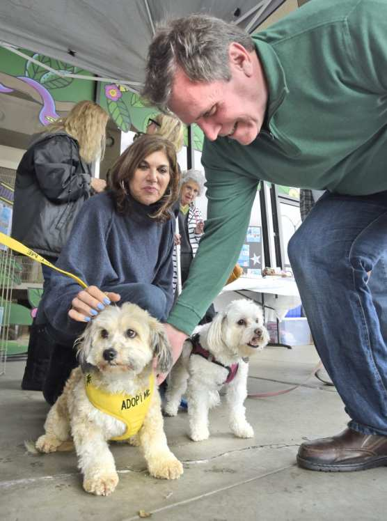 Vanessa Wilk and Scott Wilk pet seven-year-old, adoptable dog, Dack, as their rescue dog AV looks on during The Brittany Foundation Adoption Day event held at Pet Supply in Saugus on Saturday. | Photo: Dan Watson/The Signal.
