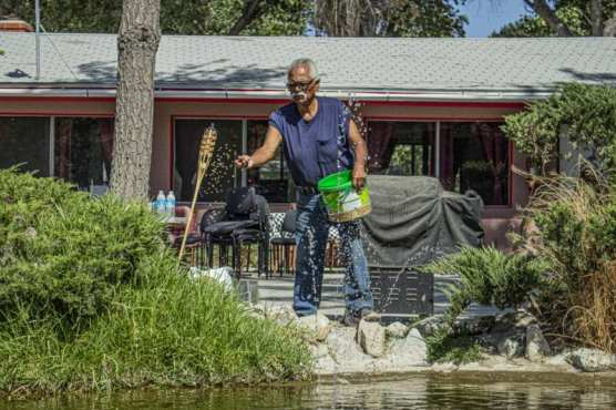 """Handyman and Groundskeeper for the Cali-Lake RV park Joe Cervantes, often called """"Uncle Joe"""" or """"Grandpa Joe"""" by residents feeds fish in a small pond in one of the park's communal areas. September 19, 2019. 