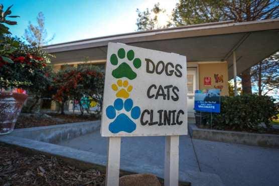 animal sheltering - care center