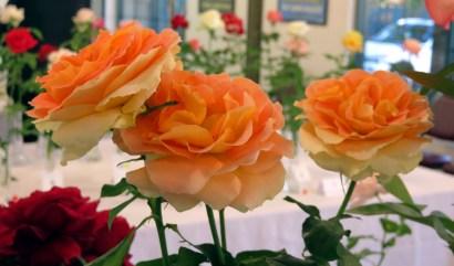 2014 Rose Show at Hart Park