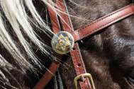 All of the tack for the Mounted Enforcement Unit has sheriff themed conchos and engravings.