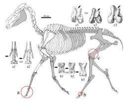 Three-toed horses reveal the secret of the Tibetan Plateau