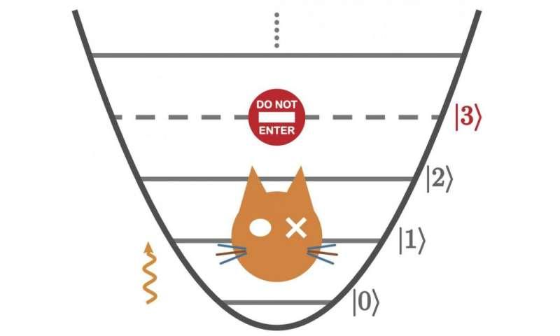 training schrodinger s cat
