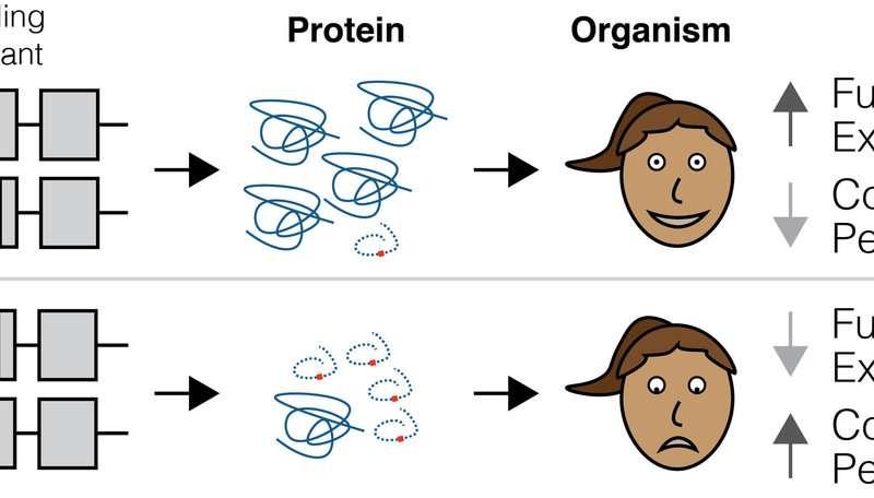 new study explains why
