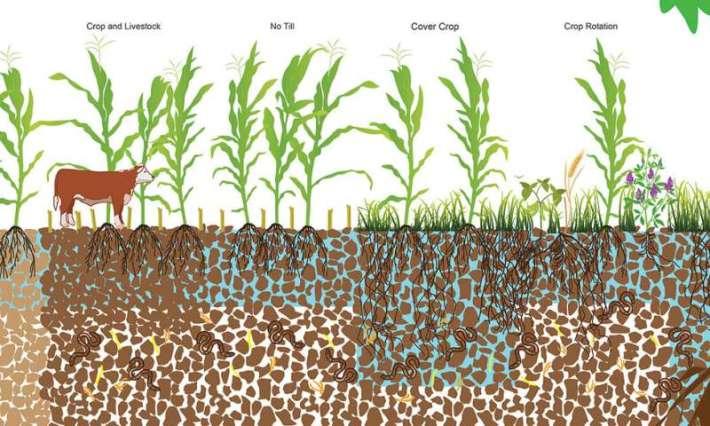 Análisis identifica prácticas agrícolas para combatir inundaciones y sequías