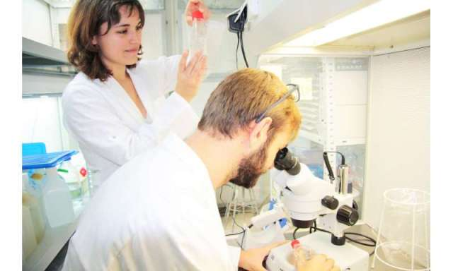 Parasite manipulates algal metabolism for its own benefit