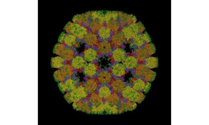 La géométrie devient virale: les chercheurs utilisent les mathématiques pour résoudre le problème des virus