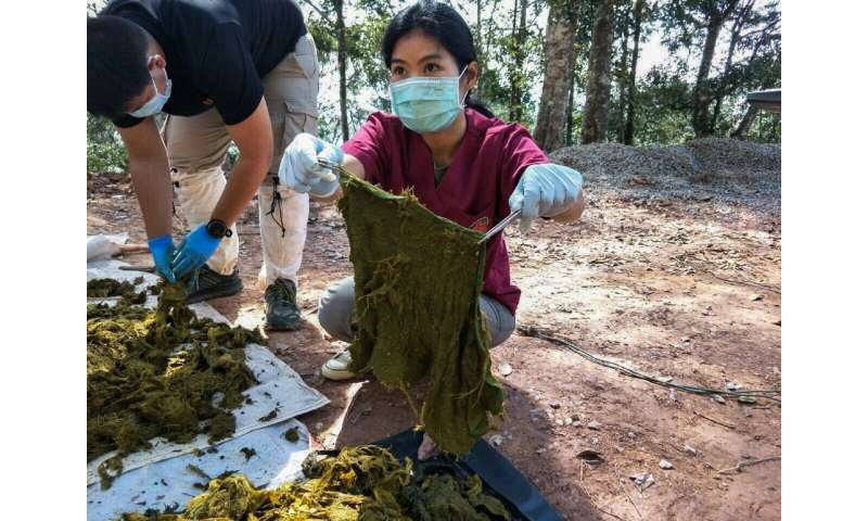 Thailand The bags found inside the deer's stomach contained coffee grounds, instant noodle packaging, garbage bags, towels and also under