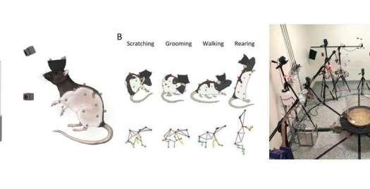 CAPTUREing Whole-Body 3D movements
