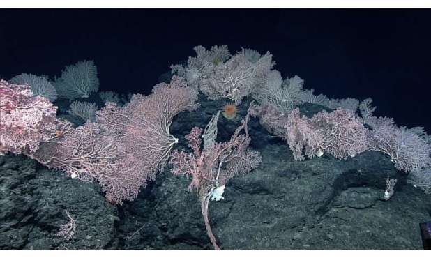 Deep-sea misconceptions reduce seabed-mining effects