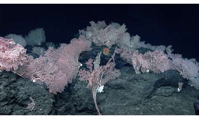 Deep-sea misconceptions cause underestimation of seabed-mining impacts