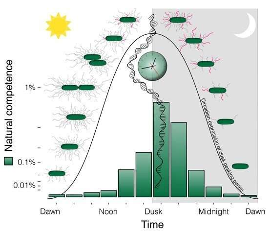 Researchers discover importance of aligning biological clock with day-night cycles