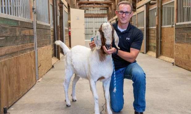 Gene-edited livestock 'surrogate cirrus' successfully made fertile