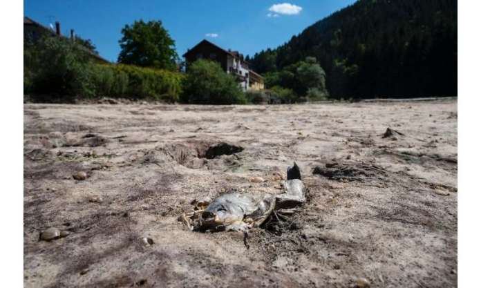 A dead fish in the dry Doubs in eastern France