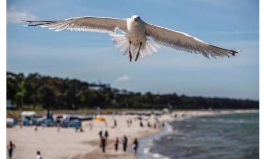 A seagull flies over a beach in the seaside resort of Binz, on the island of Ruegen in northern Germany.