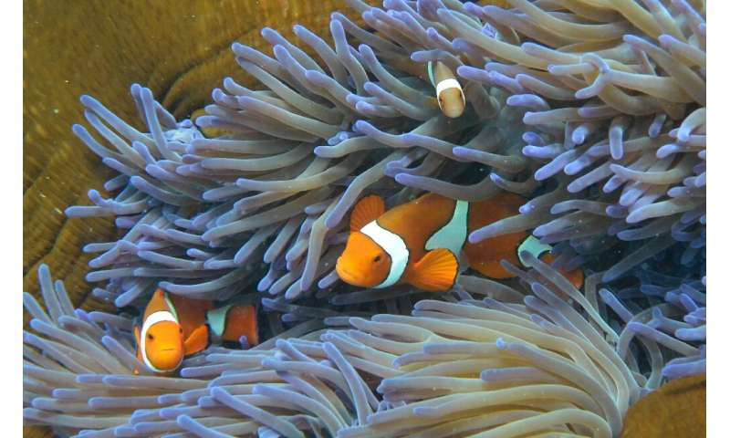 Bleachingoccurs when healthy corals become stressed by changes in ocean temperatures