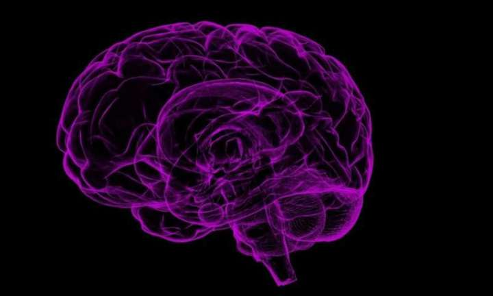 Brain measurements reveal success of public health campaigns