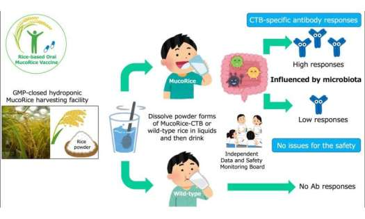 Edible Cholera vaccine made of powdered rice proves safe in phase 1 human trials