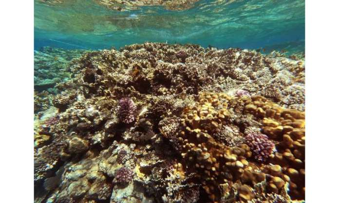 The Red Sea is home to some 209 different types of coral reefs, according to Egypt's environment ministry