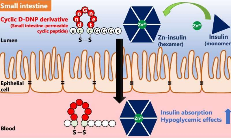 Toward painless oral insulin administration