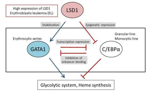 Unraveling the mechanisms that create the individualized metabolism in leukemia