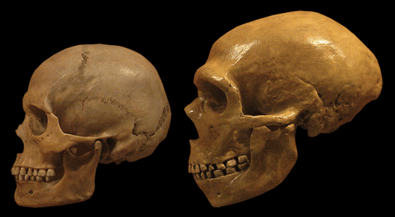 Neanderthal and early modern human stone tool culture lived together for over 100,000 years.