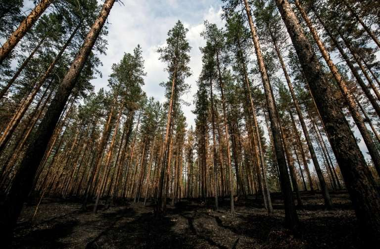 Janeb13/pixabay there are several tree diseases that attack hardwoods trees which can ultimately cause death or de. Fires Spark Biodiversity Criticism Of Sweden S Forest Industry