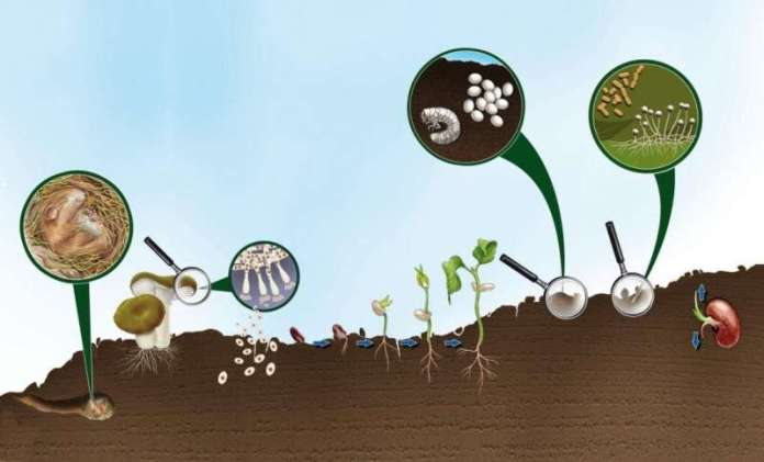 On course for healthier, more sustainable soil
