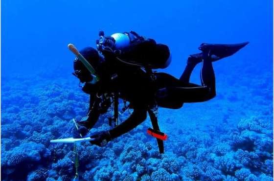 Poop corals may need their predators
