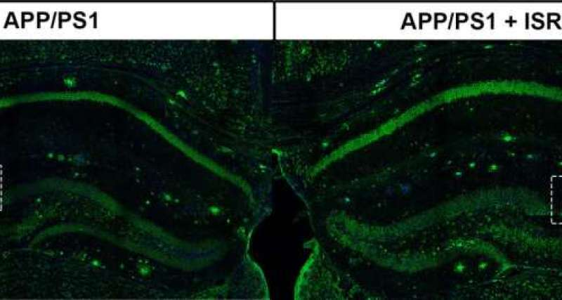 Scientists find promising avenue to restore cognitive function impaired by Alzheimer's disease