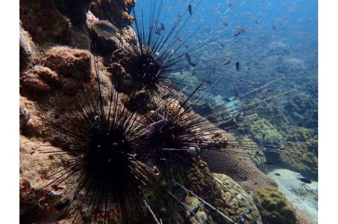 A new method for predicting the response of ecosystems to marine heatwaves