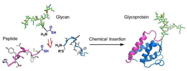 A winning combination for glycoprotein synthesis