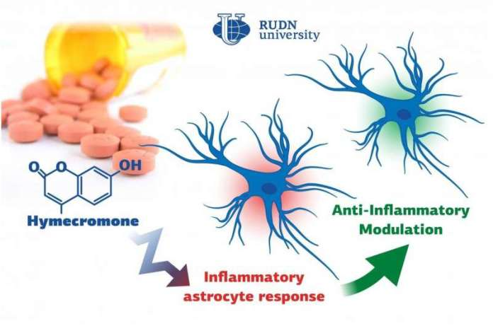 Biologists from RUDN University suggested a new substance to suppress neuroinflammation