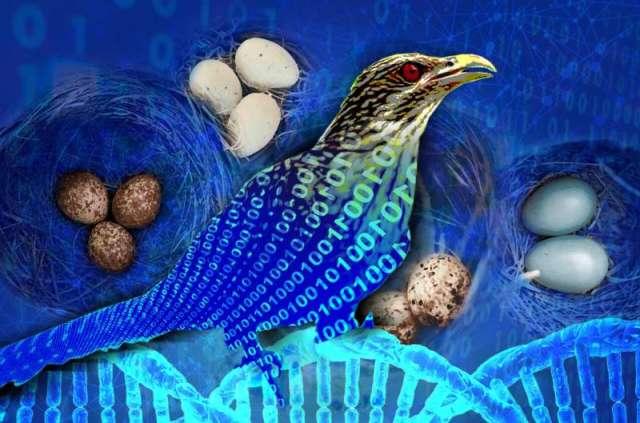 Les experts réduisent les temps de recherche de nouveaux alliages à haute entropie de 13000 fois grâce à Cuckoo Search