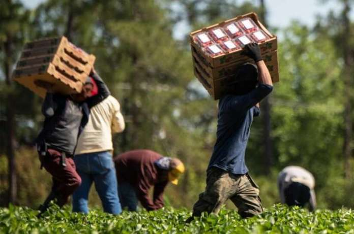 Hispanic immigrants of working age at highest risk of dying from COVID-19