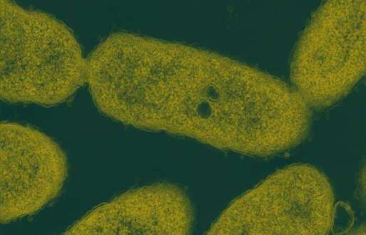 New enzyme breaks down waste for less expensive biofuels, bioproducts