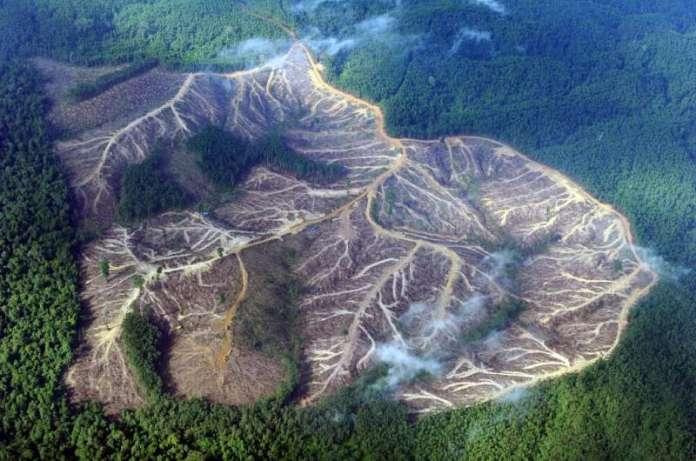 Protecting trees is key to meeting ambitious climate goals, with tropical rainforest loss accounting for about eight percent of