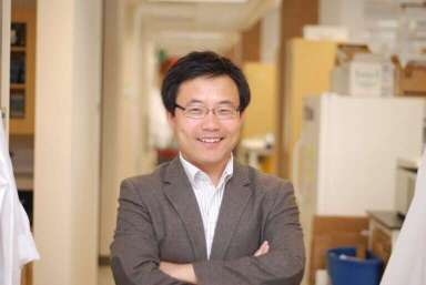 """Researchers identify a new mechanism by which transplanted stem cells treat disease 