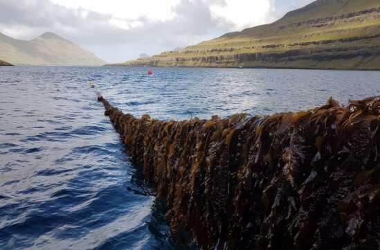 शोधकर्ताओं का कहना है कि समुद्री शैवाल की खेती मानव स्वास्थ्य और समुद्री जीवन को बढ़ाने वाले अतिरिक्त पोषक तत्वों को सोख सकती है