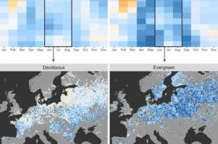 Satellites reveal how forests increase clouds and cool climate