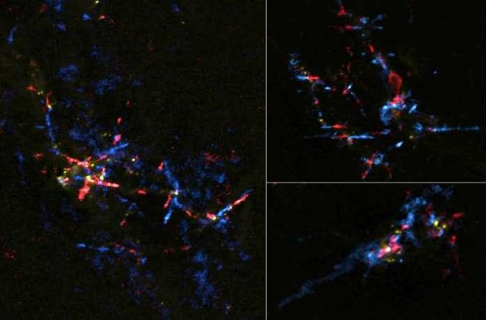 गांगेय केंद्र के पास तारकीय अंडे बच्चे सितारों में हैचिंग