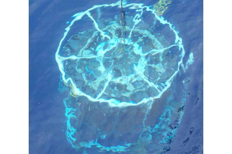Tiny organisms shed big light on ocean nutrients