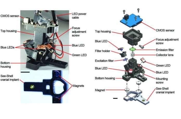 Unique mini-microscope provides insight into complex brain functions