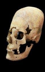Skulls show women moved across medieval Europe not just men