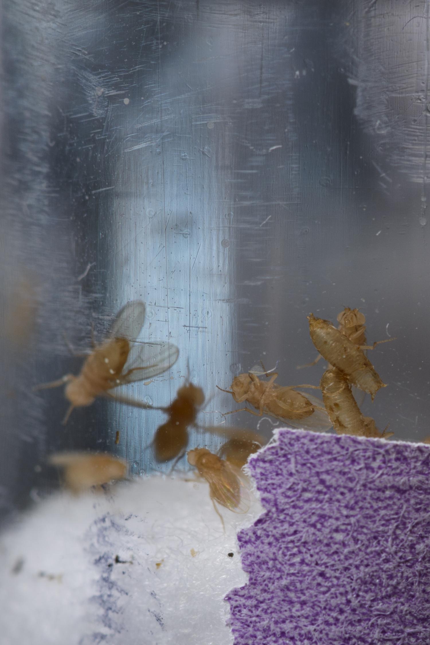 Fruit Flyt Impacts Descendants Researcher Finds