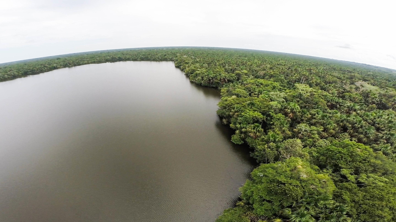 major natural carbon sink