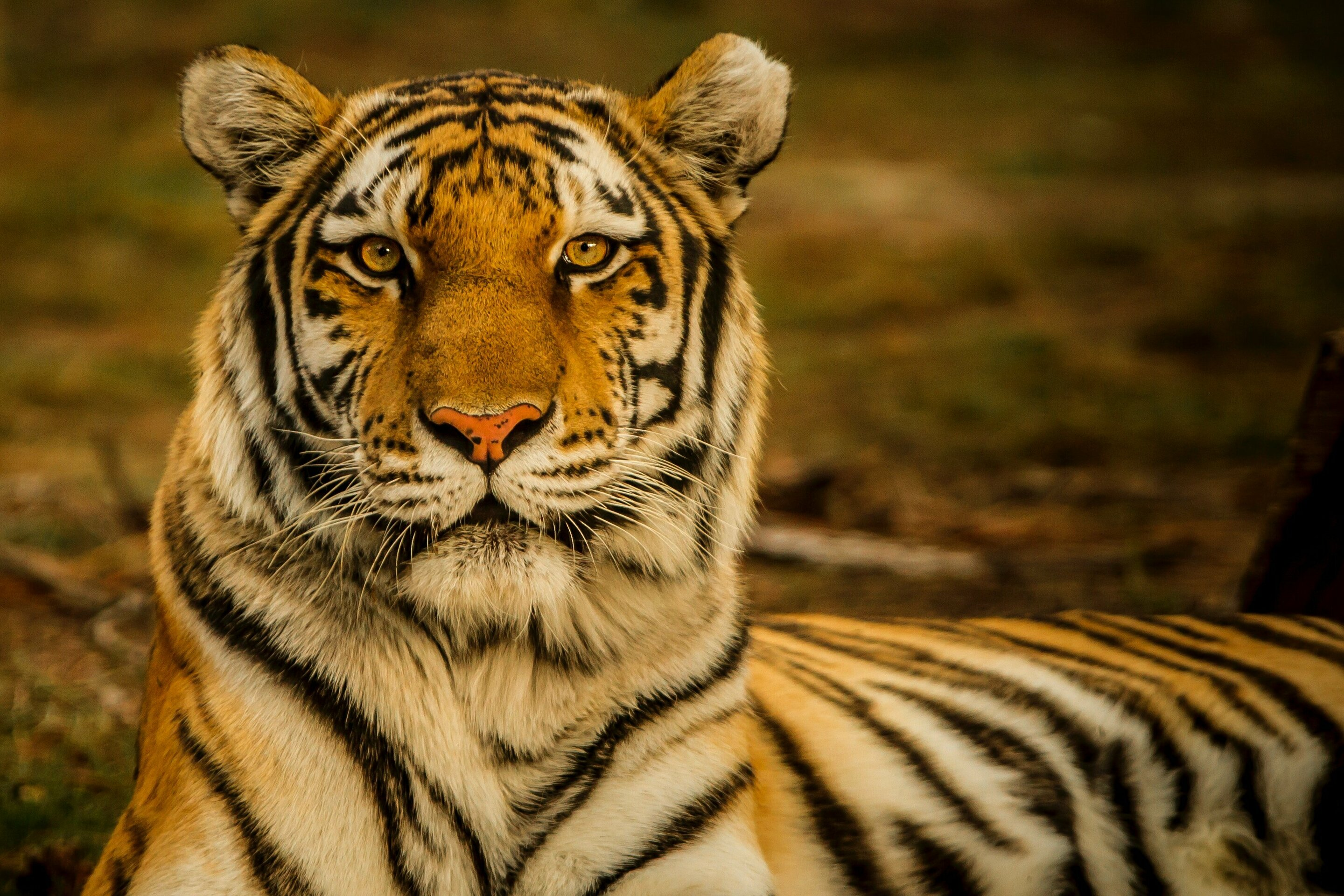 New Mathematical Model To Save Endangered Species