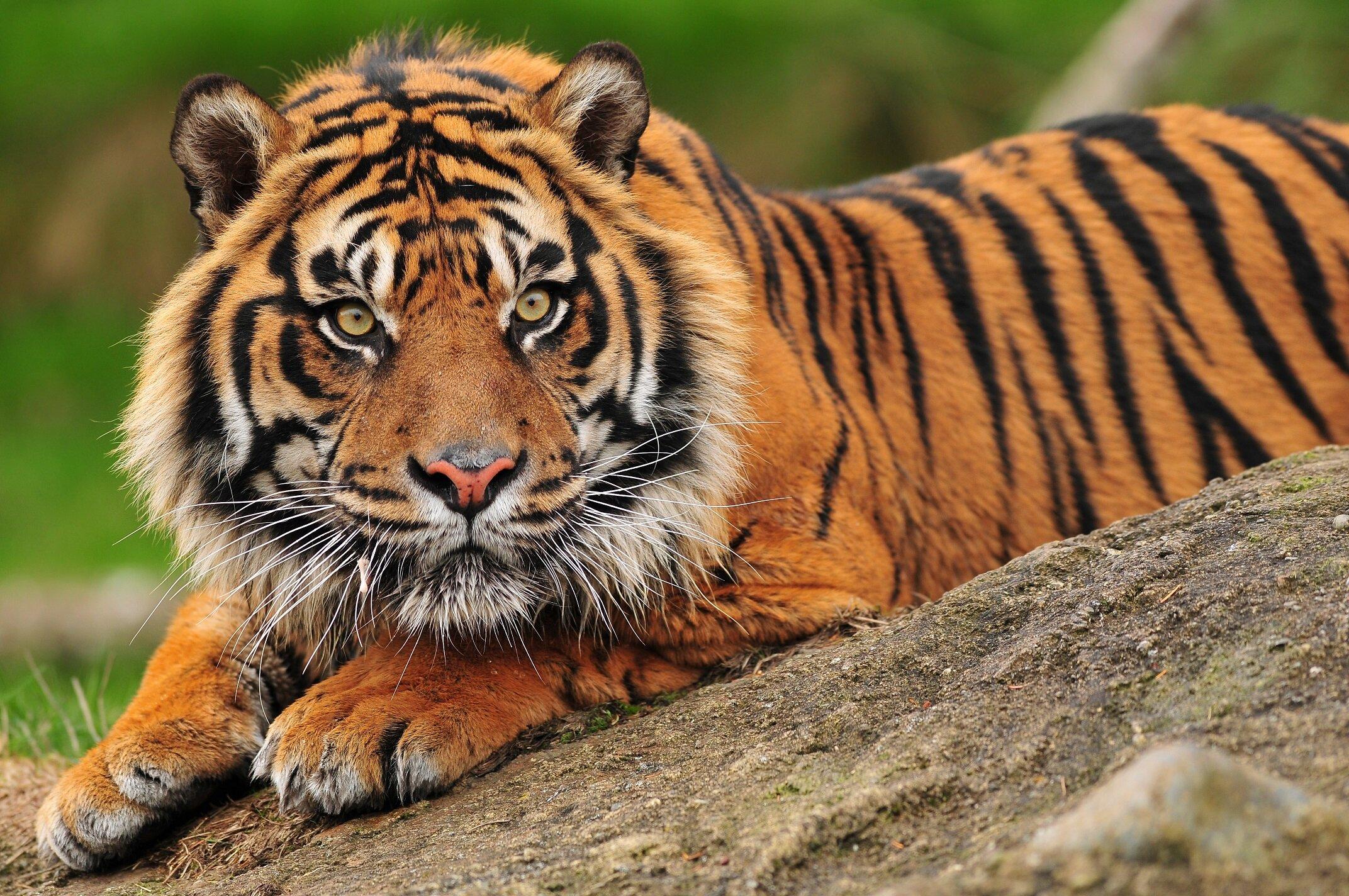 Using Digital Cameras For Basic Health Checks Saves Zoo Animals From Anesthetics