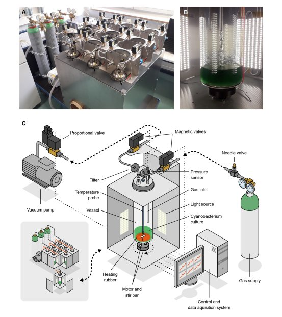 A new method for growing cyanobacteria in conditions similar to Mars